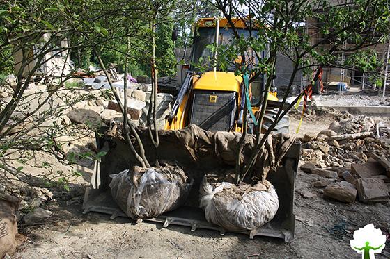 Перевозка растений к месту посадки