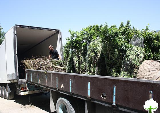 Доставка растений на объект