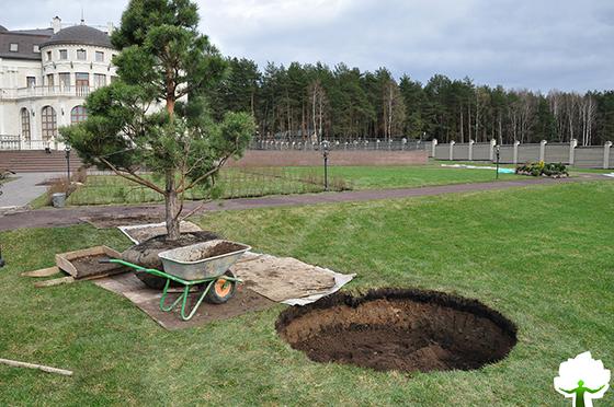 Устройство посадочной ямы